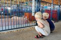 Young Children Looking at Pigs at County Fair Royalty Free Stock Photo