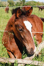 Young colt horse inside a fence Stock Photo