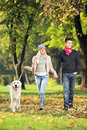 Young couple holding hands and walking a dog Royalty Free Stock Photo