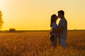Young couple kissing in the field of wheat on sunny summer day Stock Photography