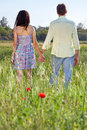 Young couple walking through a poppy field affectionate with colorful red flowers strolling hand in hand away from the camera Royalty Free Stock Photos