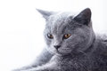 Young cute cat close-up portrait. Royalty Free Stock Photo