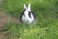 Young domestic rabbit in the grass Royalty Free Stock Images