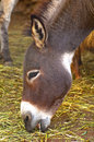 Young donkey head Stock Images