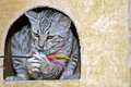 Young egyptian mau Royalty Free Stock Photo