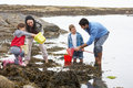 Young family at beach collecting shells Royalty Free Stock Photo