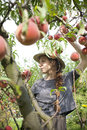 Young farmer woman with plait and straw hat who gathers and taste fresh peaches from tree pretty Stock Photos