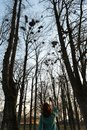 Young female ornithologist taking a photo of rooks nesting high up in trees in Spring - Bauska, Latvia, 2019