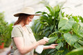 Young female wearing a hat watering the plants Stock Images