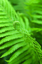 Young fern leaf. Stock Image
