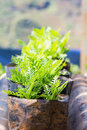 Young flower plant propagation in pot Stock Image