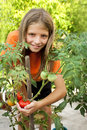 Young gardener grown tomatoes agriculture garden Stock Image
