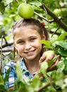 Young girl in an apple orchard smiling collects the apples from tree Royalty Free Stock Photos