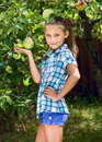 Young girl in an apple orchard smiling collects the apples from tree Stock Image