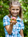 Young girl in an apple orchard smiling collects the apples from tree apples the foreground Stock Photo