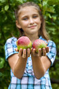 Young girl in an apple orchard smiling collects the apples from tree apples the foreground Stock Image