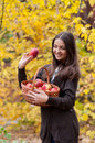 Young girl in autumn park with a basket of apples beautifulgirl Stock Photos