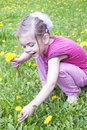 Young girl in a field of dandelions Royalty Free Stock Images