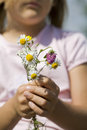 Young girl holding daisy flowers outdoors closeup of bunch of wild being held by on sunny summer day Stock Images