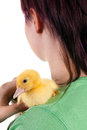 Young girl hugging newborn easter duckling her shoulder Stock Image
