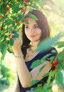 Young girl picking cherry from cherry tree Royalty Free Stock Photo