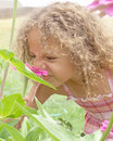 Young girl smelling flower Royalty Free Stock Photography