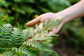 Young Girl Touching Holding Fern Leaf In Summer Park Forest. Royalty Free Stock Photo