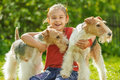 Young girl and two fox terriers little with dogs of breed terrier on green lawn Royalty Free Stock Photo