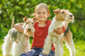 Young girl and two fox terriers little with dogs of breed terrier on green lawn Stock Image