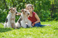 Young girl and two fox terriers little with dogs of breed terrier on green lawn Stock Photos