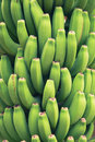 Young green bananas Royalty Free Stock Photo