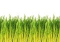 Young green grass pattern white background on Royalty Free Stock Photos
