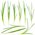 Young green onion set Royalty Free Stock Photography