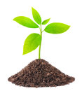 Young green plant growing from soil isolated on white Royalty Free Stock Photo
