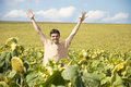 Young happy man in a sunflower field Royalty Free Stock Photography