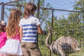 Young happy smiling kids feeding emu ostrich on bird farm Royalty Free Stock Photo