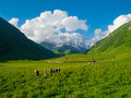 Young hikers trekking in svaneti georgia shkhara mountain the background Royalty Free Stock Image
