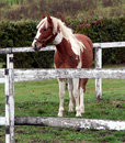 Young horse on the farm