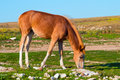 Young horse farm animal pastured on green valley eating fresh grass rural landscape Stock Photography