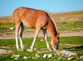 Young horse farm animal pastured on green valley eating fresh grass rural landscape Stock Photos