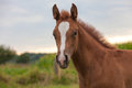 Young horse this mother with standing in pasture by curiosity alone the looking at me Stock Images