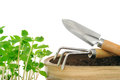 Young impatiens flowers and gardening tools