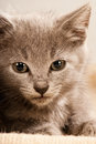 Young kitty Stock Photography