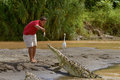 A young man feeding a crocodile at the shore of a river in costa rica october Stock Image