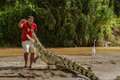 A young man feeding a crocodile at the shore of a river in costa rica october Royalty Free Stock Photo