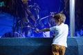 Young man focusing a big fish in a tank at the aquarium Royalty Free Stock Image