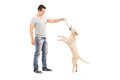 Young man holding a bone and playing with puppy full length portrait of isolated on white background Royalty Free Stock Image