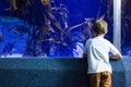 Young man looking at fish and algae tank the aquarium Royalty Free Stock Image