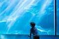 Young man looking at fish in a giant tank the aquarium Royalty Free Stock Photography