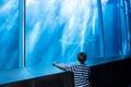 Young man looking at a shark in a big tank the aquarium Stock Photography